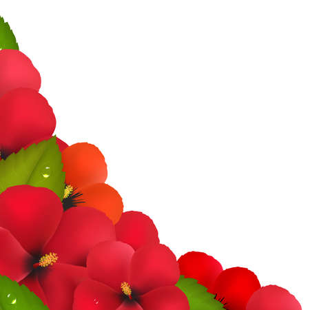 stigma: Red Hibiscus Flowers With Leaf Border, Isolated On White Background Illustration