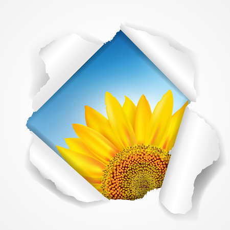 Sky And Sunflower Torn With Gradient Mesh, Illustration Stock Vector - 16667171