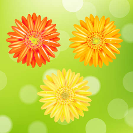 daisyflower: 3 Color Gerber With Gradient Mesh, Isolated On Green Background, Vector Illustration