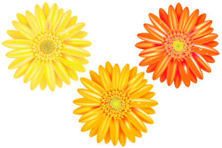 3 Yellow And Orange Gerbers With Gradient Mesh, Isolated On White Background, Vector Illustration