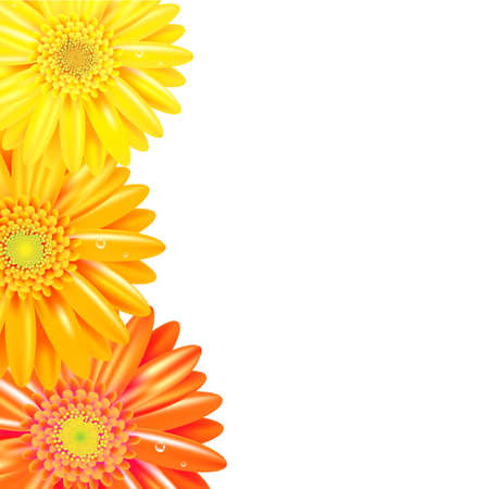 Yellow And Orange Gerbers Border, Isolated On White Background, Vector Illustration