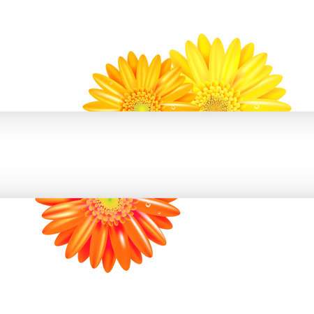 Yellow And Orange Gerbers With Banner, Isolated On White Background, Vector Illustration  イラスト・ベクター素材