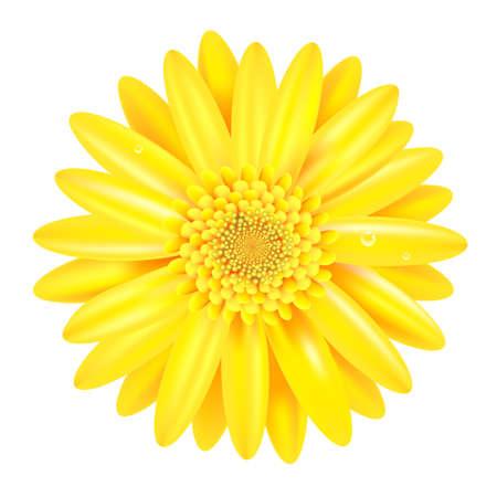 Gele Gerber Met Verloopnet, Geà ¯ soleerd Op Witte Achtergrond, Vector Illustratie