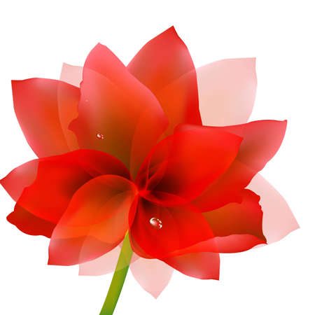Red Tulip With Water Drop With Gradient Mesh, Vector Illustration Ilustração