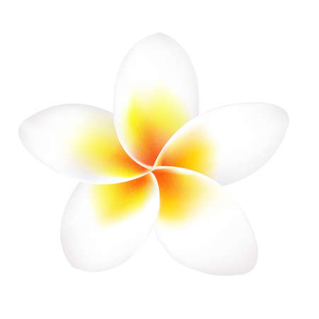 stench: Frangipani Flower Isolated, With Gradient Mesh, Vector Illustration Illustration
