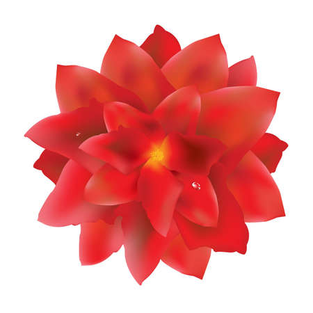 Red Flower With Water Drops, With Gradient Mesh, Vector Illustration Vector