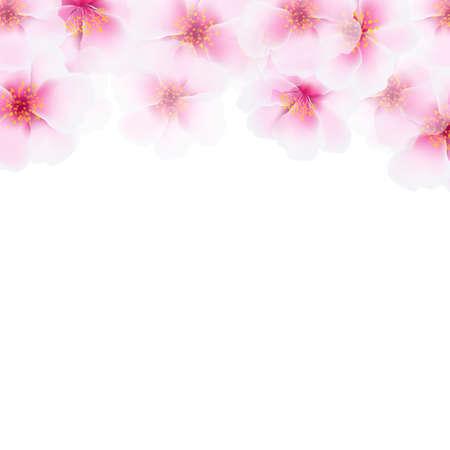 fleur de cerisier: Fleur rose fronti�re Cherry, avec un filet de d�grad�, vecteur Illustration