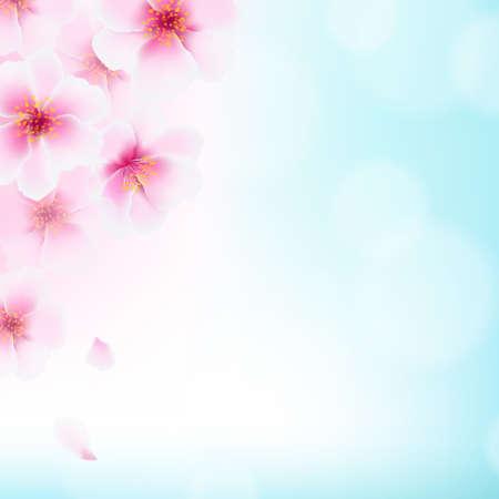flor de sakura: Flores de cerezo, con malla de degradado, ilustración vectorial
