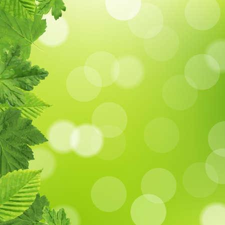 lupine: Green Leaves Frame Illustration