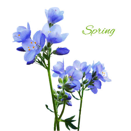 Blue Watercolor Flowers, Vector Illustration Vector