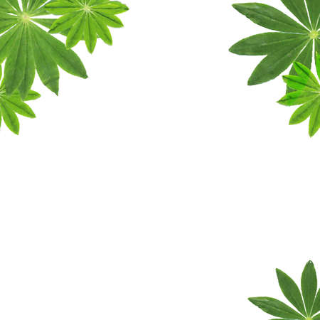 lupine: Green Leaves Frame, With Gradient Mesh Illustration