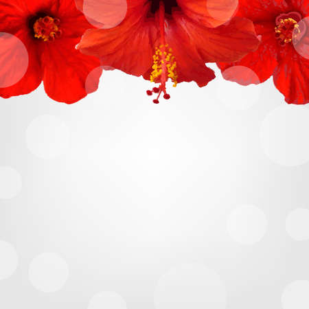 beautiful red hibiscus flower: Flowers Border, With Gradient Mesh, Vector Illustration
