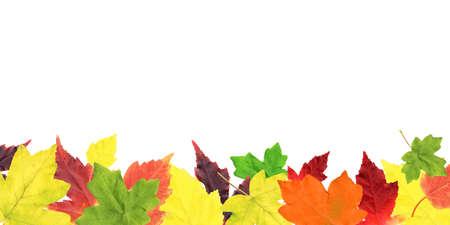 Autumn Leaves Border, Vector Illustration Vector