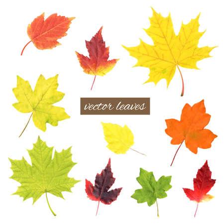 Autumn Leaves Set, Vector Illustration Vector