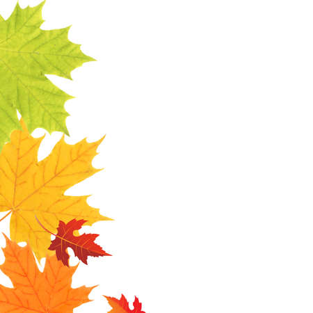 Color Leaves Border, Vector Illustration Vector