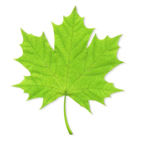 Green Leaf, Vector Illustration Vector