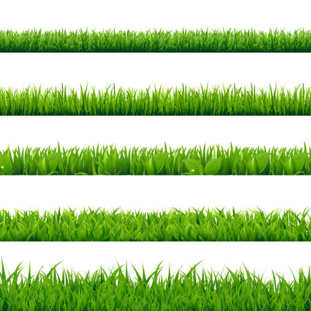 grass: Grass Big Set, Vector Illustration