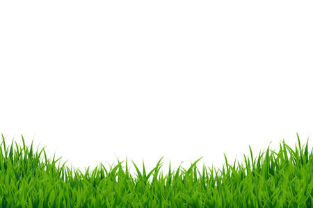 hedges: Green Grass Border, Vector Illustration