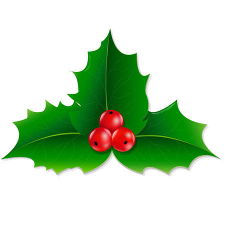 spiked: Holly Berry With Gradient Mesh, Vector illustration