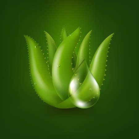 Aloe Vera Plant With Gradient Mesh, Vector Illustration