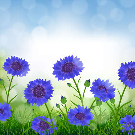 Cornflowers With Bokeh With Gradient Mesh, Vector Illustration Illustration