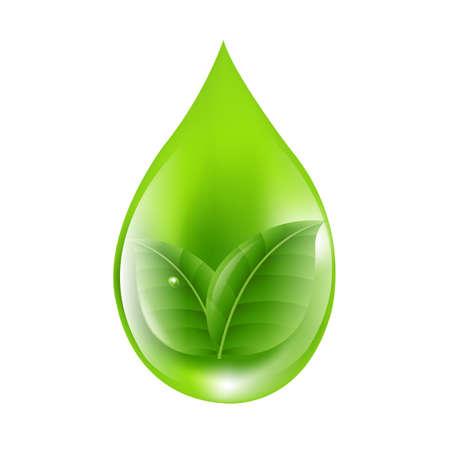 macro leaf: Green Drop With Gradient Mesh, Vector Illustration