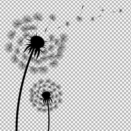 Dandelion With Transparent Background With Gradient Mesh, Vector Illustration