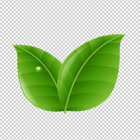 Green Leaves With Gradient Mesh, Vector Illustration Illustration
