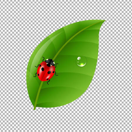 eyes closeup: Ladybug With Leaf Isolated In Trasparent Background Gradient Mesh, Vector Illustration