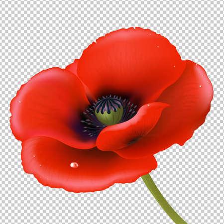 Red Poppy Gradient Mesh, Vector Illustration