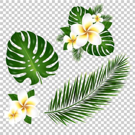Hoja de palmera y monstera, ilustración vectorial Foto de archivo - 81743045