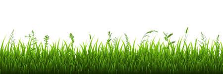 Confine di erba verde, illustrazione Vettoriali