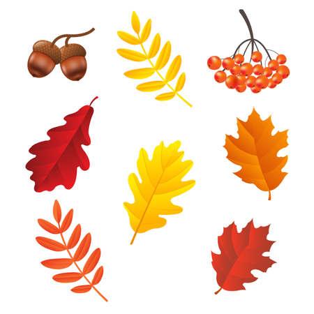 Autumn Set, Vector Illustration, With Gradient Mesh