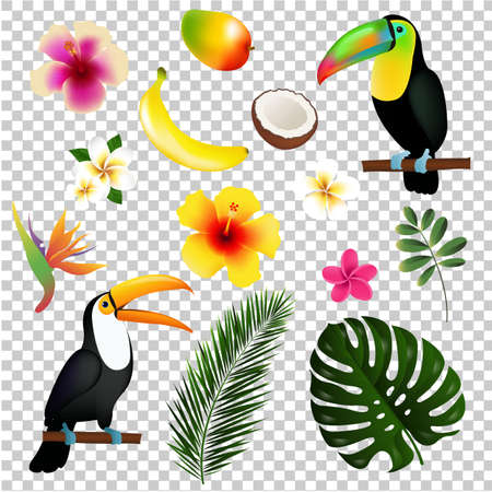 Tropical Leaves Toucan And Fruit, Vector Illustration, With Gradient Mesh.