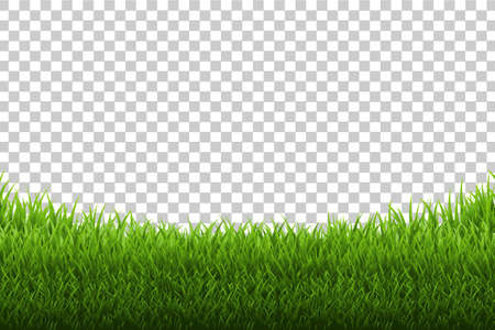 Grass Panorama Transparent Background, Vector Illustration