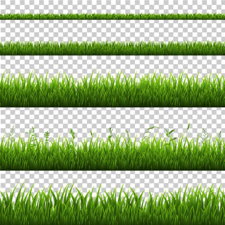 Grass Border Isolated, Vector Illustration