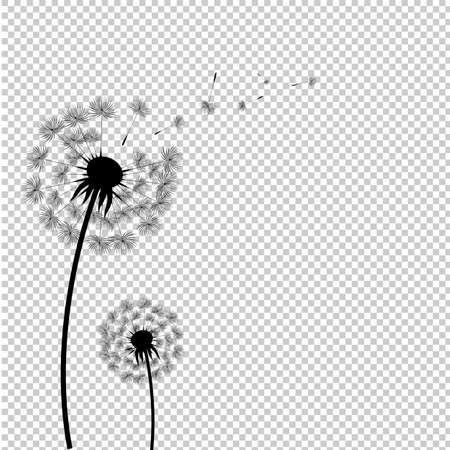 Silhouette Dandelion Isolated Transparent Background, Vector Illustration
