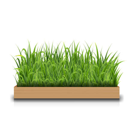 Green Grass With Wood With Gradient Mesh, Vector Illustration
