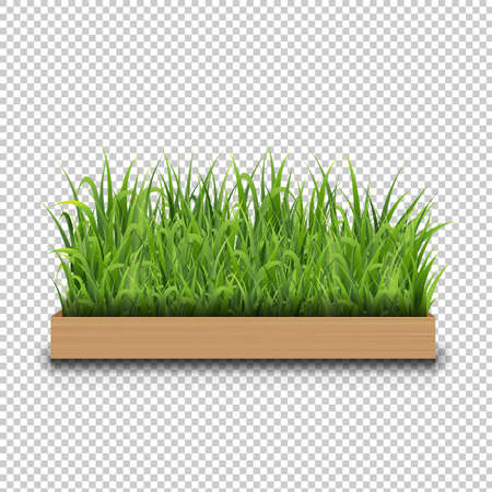 Green Grass With Wood Transparent Background With Gradient Mesh, Vector Illustration