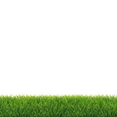 Green Grass White Background, Vector Illustration Illustration