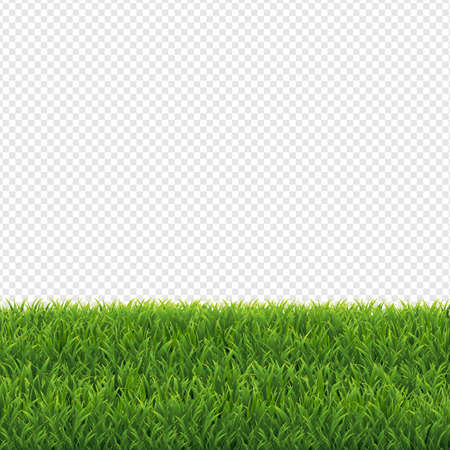 Green Grass Transparent Background, Vector Illustration