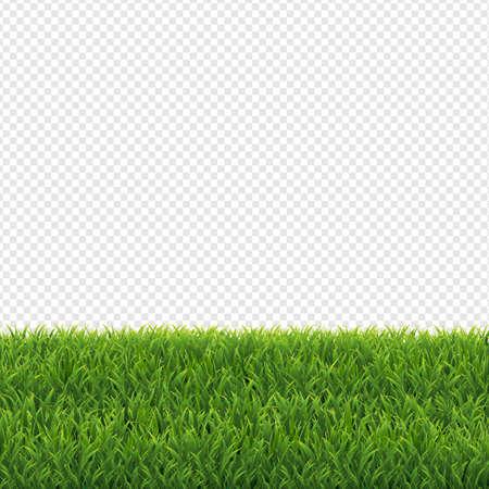 Groen gras transparante achtergrond, vectorillustratie