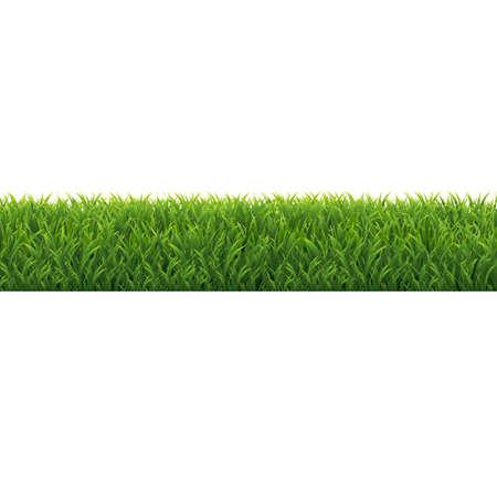 Green Grass Border Background, Vector Illustration