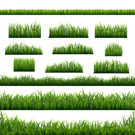 Green Grass Panorama White Background, Vector Illustration