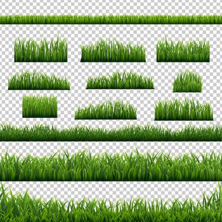 Green Grass Panorama Transparent Background, Vector Illustration