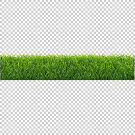 Green Grass Background Isolated Transparent Background, Vector Illustration