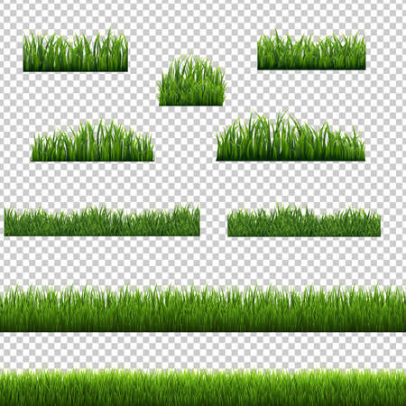 Big Set Green Grass Borders Transparent Background White Background, Vector Illustration Stock Illustratie
