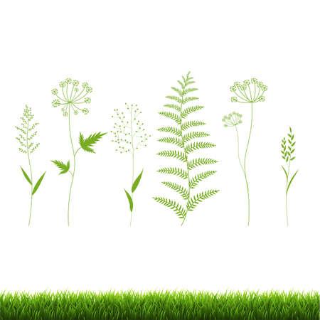 Green Grass Set Isolated White Background, Vector Illustration Ilustracja