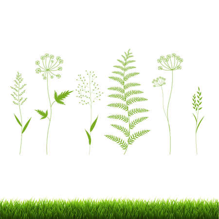 Green Grass Set Isolated White Background, Vector Illustration Illustration