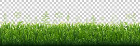 Green Grass Border With Transparent background, Vector Illustration Illustration